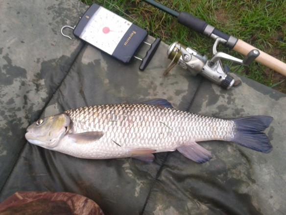 Dave Steen River Dane 3lb 6oz Chub