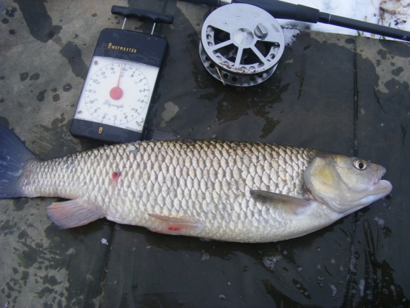 Dave Steen River Dane 4lb 3oz Chub