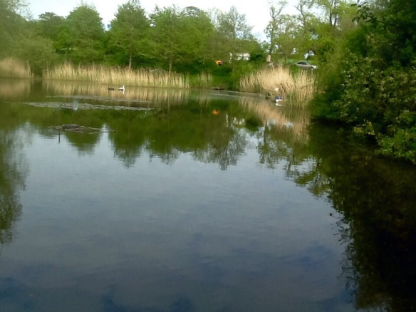 Manley Old Hall Fishery Cherry 001