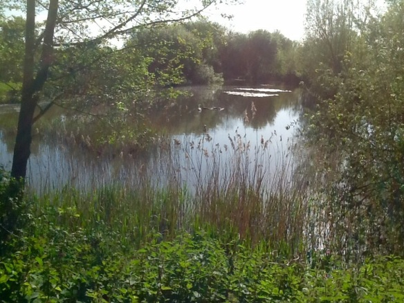 Manley Old Hall Fishery Cherry 002