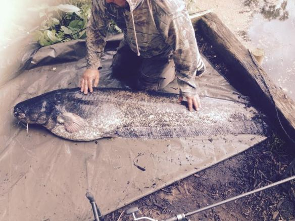 Lymmvale 70lb 2oz Catfish